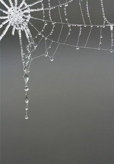 A gorgeous spider web collects the rain. Spider Art, Spider Webs, Itsy Bitsy Spider, Dew Drops, Rain Drops, Water Droplets, Macro Photography, Urban Photography, Abstract Photography