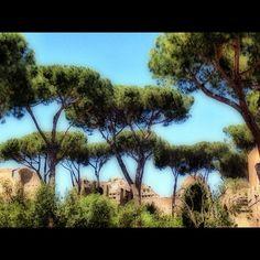 Palatino in Roma, Lazio