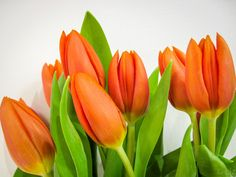 Tulips by lizfortie on 500px