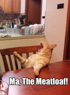 MA, the meatloaf!!!! This just cracked me up...every time I make meatloaf , my husband and kids yell this..Not sure why-have I missed something? Lol