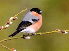 Resultado de imagen de BEAUTIFUL BIRDS PHOTOS