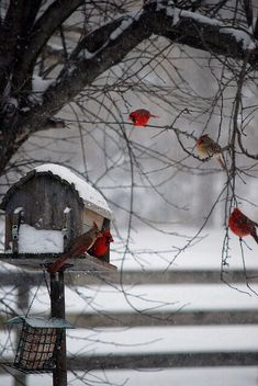 Love the red cardinals in the almost black and white scene.