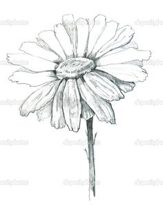 Daisy Sketch | Cart Cart Lightbox Lightbox Share Facebook Twitter Google Pinterest