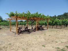 a visit on sebastiani vineyard