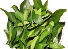 Health Benefits of Curry Leaves for Babies. There are numerous benefits provided by curry leaves which include good eye sight, gastro-intestinal health, cure of diarrhea and dysentery, etc.
