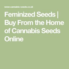 Feminized Seeds | Buy From the Home of Cannabis Seeds Online