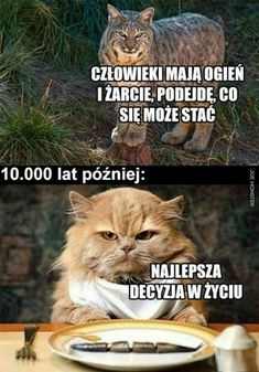 Polish Memes, Komodo Dragon, Quality Memes, Good Mood, Best Memes, I Laughed, Funny Cats, Haha, I Am Awesome