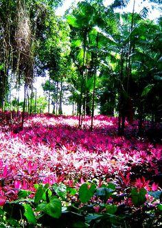 Parque de la Exótica Flora Tropical,  San Felipe, Edo. Yaracuy en Venezuela