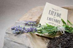 Thankz | een levende herinnering | Liefde en lavendel 'Lavendel'