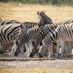 Eingereicht von mb_picture5 #suedafrika #suedafrika_erleben #suedafrika_erleben_contest
