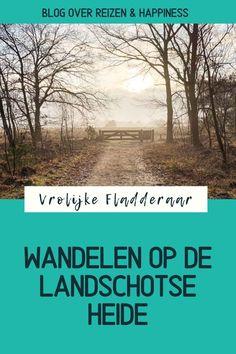De Landschotse Heide in Noord Brabant, onderdeel van natuurgebied De Kempen, is een prachtig gebied met heide en vennen waar je twee mooie wandelroutes vindt (3,5km / 6km). Rustige omgeving voor een heidewandeling. Aanrader voor wie wil wandelen in Brabant #Nederland In het artikel vind je tips, praktische informatie en foto's.