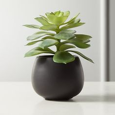 Faux succulent will stay forever green in its smooth black ceramic vessel. Handcrafted to look just like a real echeveria, a rose-shaped succulent native to semi-desert regions of Central America. Faux Succulents, Faux Plants, Succulent Pots, Faux Olive Tree, Forever Green, Birch Branches, Floor Plants, Decorative Planters, Home Decor Mirrors