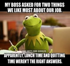Ok how about morning tea toilet break and afternoon tea toilet break so I don't have to look at you. Funny Kermit Memes, Haha Funny, Funny Jokes, Funny Shit, Funny Stuff, Funny Things, Funny Work, Memes Humor, Funny Sarcasm