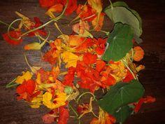 Tinktura z lichořeřišnice- rostlinné antibiotikum - Čarovná lékárna kolem nás Plants, Painting, Art, Art Background, Painting Art, Kunst, Paintings, Plant, Performing Arts