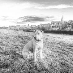 #dogwalktherapy #malmesbury #magiclight #dogsofinstagram #iphone5s #snapseed