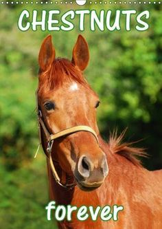 Calendar 2017, Photo Calendar, Portrait, A3, Photo Wall, English, Horses, Amazon, Animals