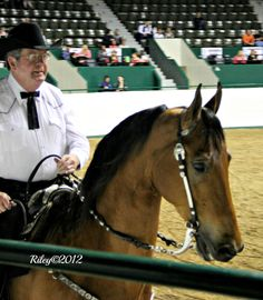 A day at the FASH horse show in Minnesota 2012