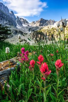 Crater Lake Wildflowers, Rocky mountains of Colorado  http://www.pagosaspringsluxproperties.com
