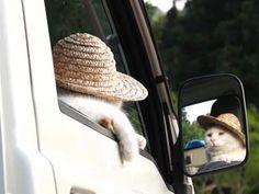 ネコが軽トラの「運ちゃん」になる → 田舎道で渋滞にハマったようです - http://iyaiyahajimeru.jp/cat/archives/61559