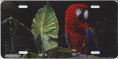 Scarlet Macaw License Plate [AS8227] Novelty License Plates, Scarlet, Bird, Animals, Animales, Animaux, Birds, Animal, Animais