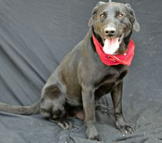This is a courtesy post for a local shelter that TLC supports, Humane Society of Cedar Creek Lake, therefore, if you are interesting in meeting this animal please complete the application at www.hsccl.org/Adoption_Application.html. If you do not...