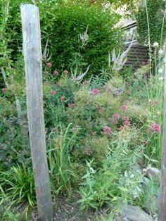 Mooie border met planten, geliefd bij bijen en andere insecten.  Enna Rörig Tuinontwerp + Beplantingsadvies
