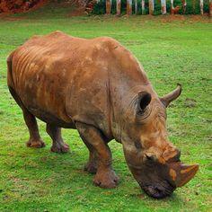 #Rhino #Cabarceno #Cantabria #Spain