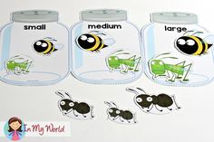 Spring Preschool Centers Insect size order sorting