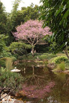 Japanese Garden - Brisbane, Australia