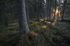 Ville Heikkinen - Luontokuvia