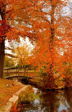Autumn on Lake Carasaljo in Lakewood, New Jersey.