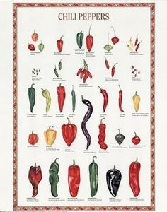 food variety posters - Google Search