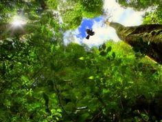 Vida Alta: Terra das Possibilidades