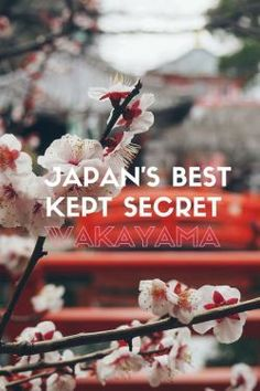 Japan travel tips. Japan's best kept secret - travel guide to Wakayama City near Osaka Hiroshima, Nagasaki, Travel Blog, Travel Deals, Asia Travel, Travel Guides, Travel Destinations, Travel Stuff, Foodie Travel