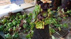 Succulent Christmas Tree Tutorial - BoredMom Succulent Tree, Succulent Planter Diy, Diy Planters, Succulents, How To Make Christmas Tree, Christmas Crafts, Xmas Trees, Backyard, Flowers