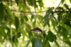 Bird taking off from a branch.Hartley's Crocodile Farm, queensland.