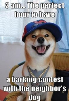 3 am& perfect hour to have a barking contest with the neighbor& dog. Funny Dogs, Funny Animals, Cute Animals, Crazy Animals, Funny Puppies, Pretty Animals, Funny Dog Pictures, Funny Images, Funny Photos