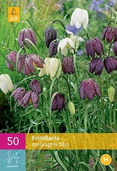 Korunovka, Fritillaria meleagris mix XXL balenie