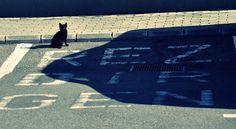 Greatest parking lot EVER! Photo: Tiberiu Matei