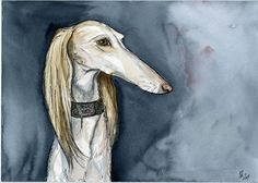 Saluki Hound Dog Art Print