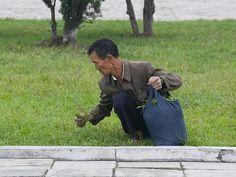 Coréia do Norte: A pobreza é tão grande que as pessoas vão aos parques comer grama e encher sacolas para levar para casa. (Foto: Eric Lafforgue)