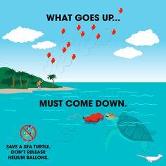 Besser keine Ballons bei Feiern wie Hochzeiten steigen lassen...