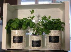 Pot pour plantes aromatiques avec boites de conserve