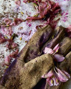 bloom magazine - photography, design - still life