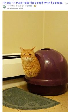 Pooping Cat Looks Like a Snail and the Internet Loves it