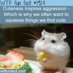 Cuteness inspires aggression - WTF fun facts