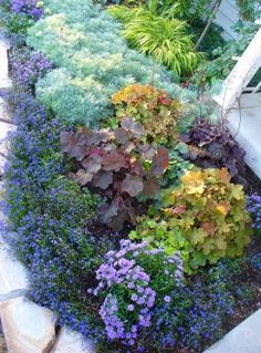 "Shade plant bed- ""Midnight"" lobelia, ""Silver Mound"" artemesia,  heuchera, purple sweet potato vine, ""Mona Lavender"" plectranthus, hakone forest grass, Japanese maple"