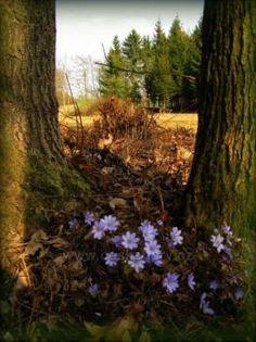 jaro... spring...