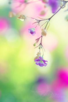 Pink Blossom And Green Bokeh Wallpapers) – Free Wallpapers Colorful Flowers, Beautiful Flowers, Beautiful Pictures, Purple Flowers, Pink Purple, Bokeh Photography, Gras, Pretty Pastel, Planting Flowers