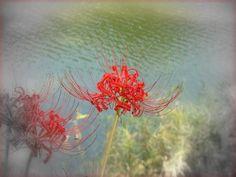 赤の羽、白の羽:魚の庭 2012-10-01